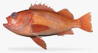 Sunset Rockfish