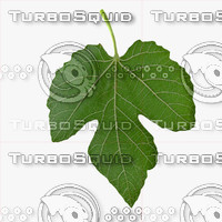 Three Side Fig Leaf