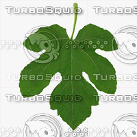 Five Side Fig Leaf