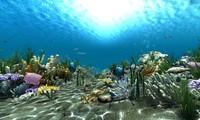 Underwater world 02