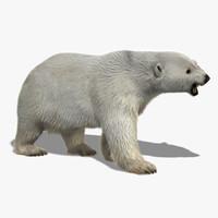 Polar Bear (2) (Fur)