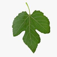 Three Side Fig Leaf