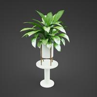 house plant Spathiphyllum