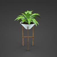 home plant Curcuma