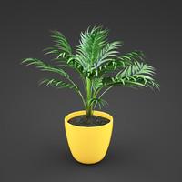 home plant Areca