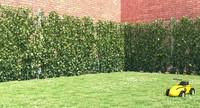 Ivy Fence GrowFX