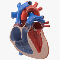 Heart Cutaway