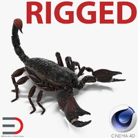 Black Scorpion Rigged for Cinema 4D