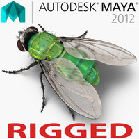 Green Bottle Fly Rigged for Maya