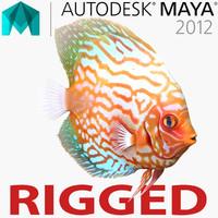 3d model symphysodon fish rigged