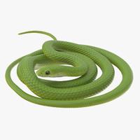 Green Snake 02