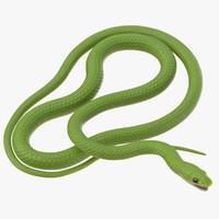 Green Snake 03