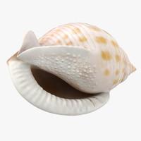 Scotch Bonnet Shell