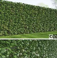 3d rich ivy