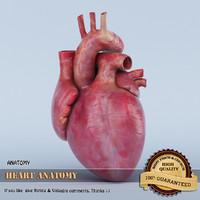 heart anatomy 3d 3ds