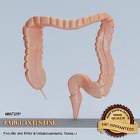 3d model large intestine