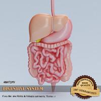 digestive organs 3d model