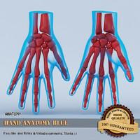 3d model hand anatomy blue
