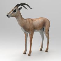 Gazelle Grants