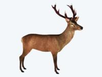 red deer stag 3d model