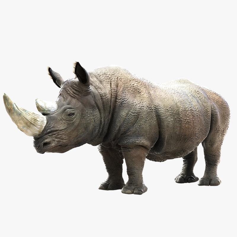 3D Fbx Rhinoceros Rhino Animal