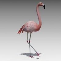 flamingo animations 3d max