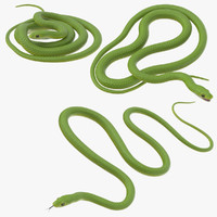 Green Snake Poses
