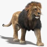 lion fur rigging animation 3d max