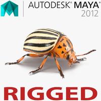 colorado potato beetle rigged ma