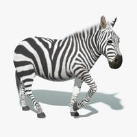 zebra fur rigged 3d model