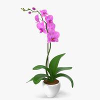 orchid modeled leaf max