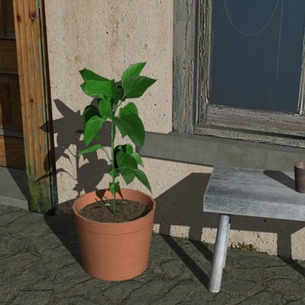 3dsmax bell pepper plant pot