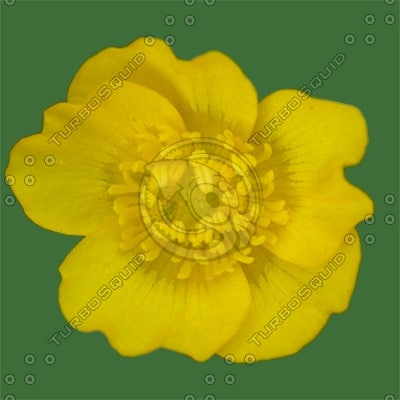 FLR013 zydroid yellow buttercup flower