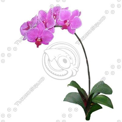 Flower_V_05.tga