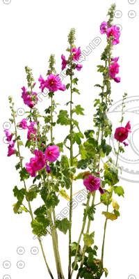 Flower_H_17.tga