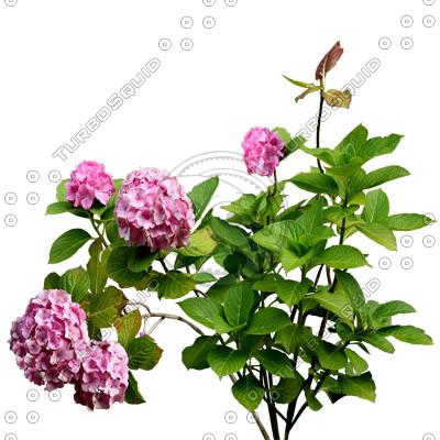 Flowers_N_03.tga