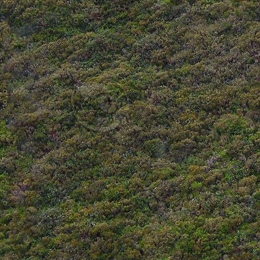 G091 hillside heather ground cover texture 512
