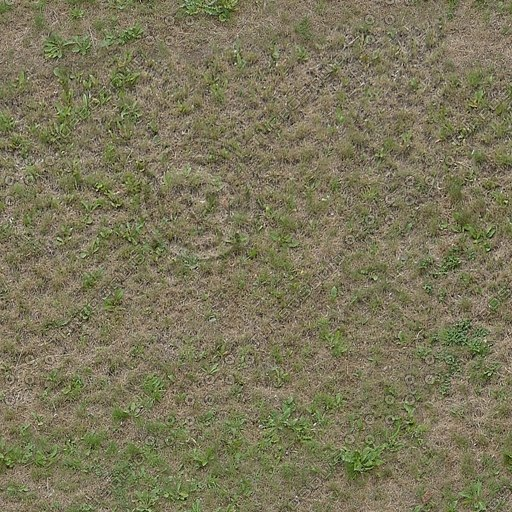 G254 patchy grass rough