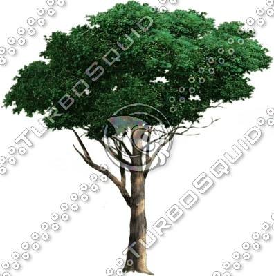 tree_05.tga