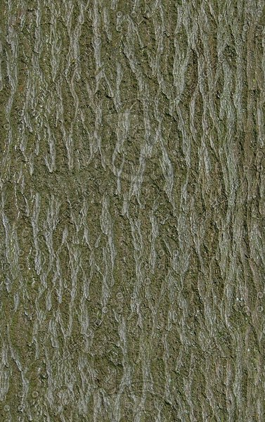 TBRK012 seamless tree bark