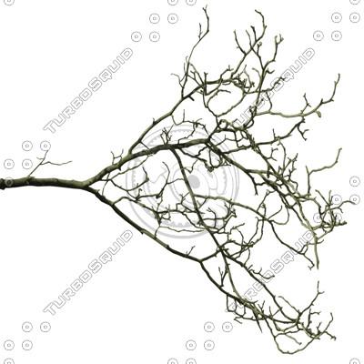 Branch_Euro_6.tga