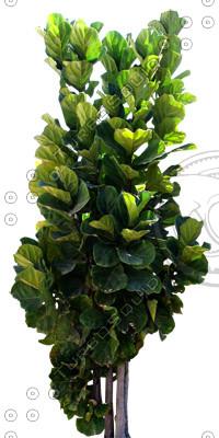 Tree_tropic_02.tga