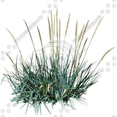 Grass_17_01.jpg