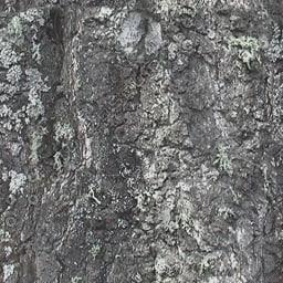 UPTBRK04 tree bark texture
