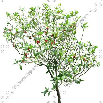 TreeL_12.tga