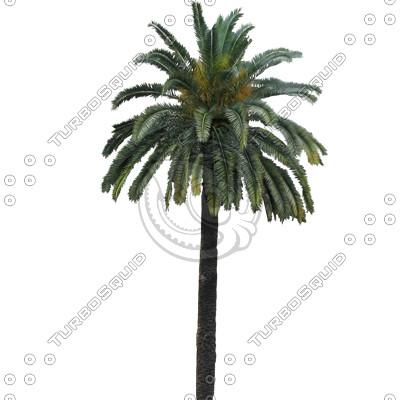 Palm_N_06.tga