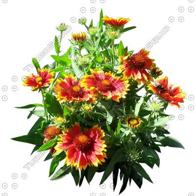 Flower_H_12.tga