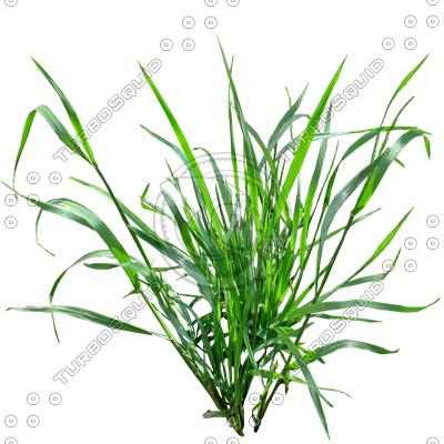 Grass_08.tga