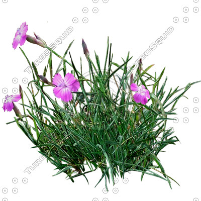 Grass_12.tga