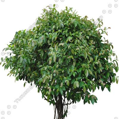 Tree_2_01.jpg